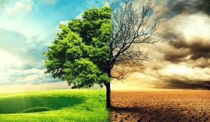La Protección del Cambio Climático: doctrina del Tribunal Constitucional